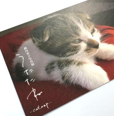 横内香子写真展「うたたね」DM